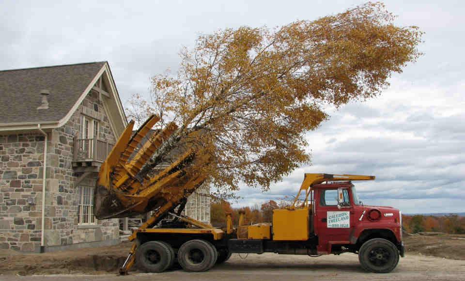Tree Moving Toronto