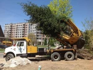 tree moving gta