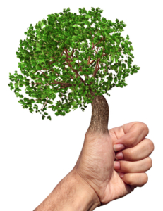 Do you need to have a Green Thumb to Grow Great Trees?