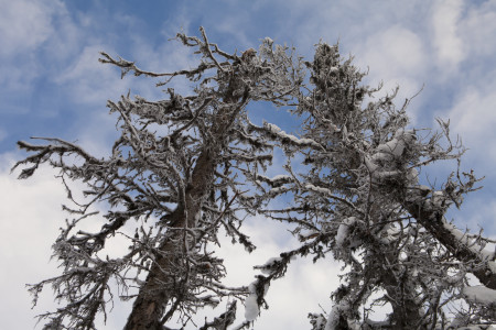 Keep Your Evergreen Trees Safe By Recognizing Common Tree Diseases