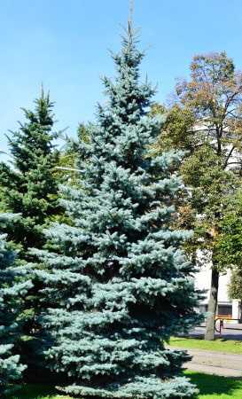 Tree Growth on Your Property: the Good Reasons Why it's a Do