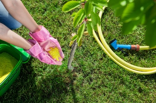 Starting a Backyard Tree Nursery is Easier Than You Think