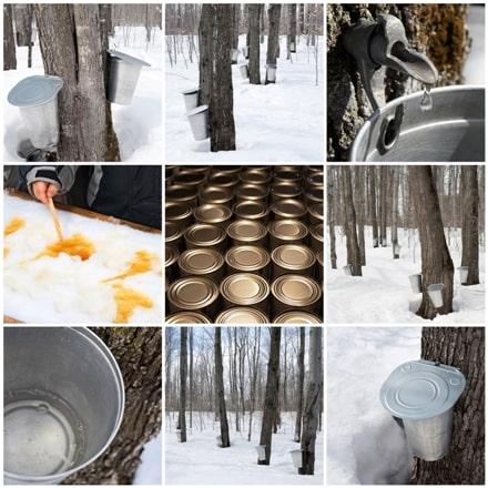 Maple Syrup: Discovering a Delicious Delight