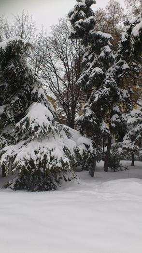 How Do Trees Survive Canadian Winters?