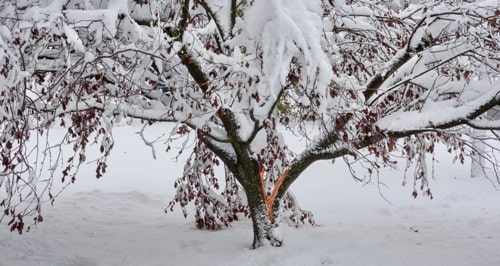Common Winter Tree Problems and Solutions