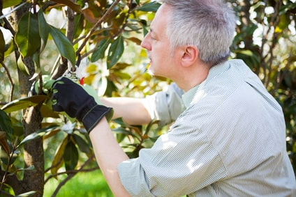 Trees in Springtime – To Prune or Not to Prune?