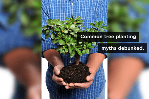 Tree Replanting Myths: How to Properly Care for Trees
