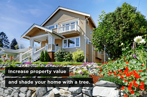 Tree replanting myths how to properly care for trees for How to increase home value