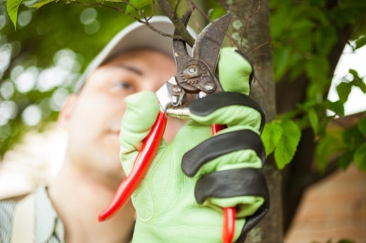 Tree Care: Reasons to Prune Your Tree