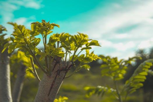 Five Tree Transplant Mistakes.jpeg2.jpeg5