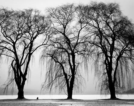 Why Trees Don't Freeze in Winter3
