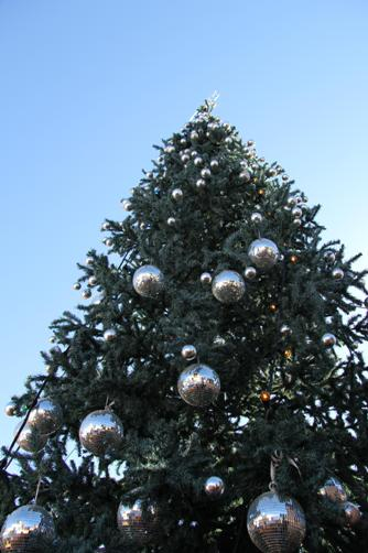 History Of Christmas Tree.The Unique History Of Christmas Trees In Canada Caledon